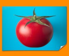 Blue Tomato Poster