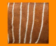 Deer Animal Skin Napkins (Set of 4)
