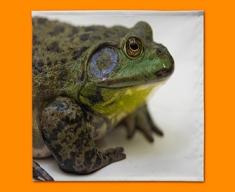 Frog Napkins (Set of 4)