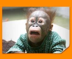 Funny Monkey Poster