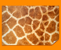 Giraffe Animal Skin Poster