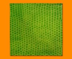 Green Snake Animal Skin Napkins (Set of 4)