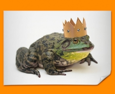 King Frog Poster