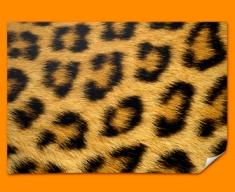 Leopard Animal Skin Poster