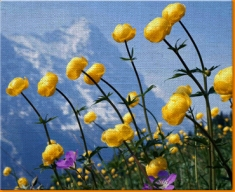 Mountain Flowers Canvas Art Print