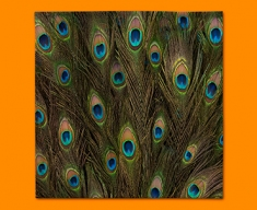 Peacock Feathers Napkins (Set of 4)