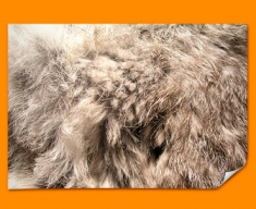 Rabbit Animal Skin Poster