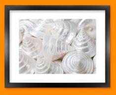 Sea Cone Shells Framed Print