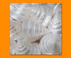 Sea Cone Shells Napkins (Set of 4)