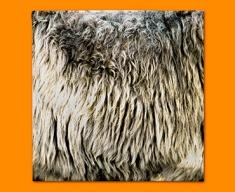 Sheep Animal Skin Napkins (Set of 4)