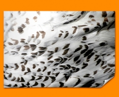 Snowy Owl Animal Skin Poster