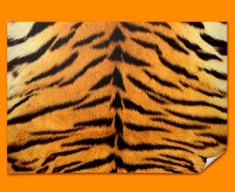 Tiger Animal Skin Poster