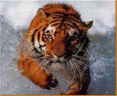 Tiger In Water Canvas Art Print