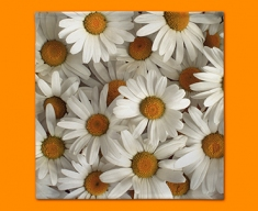 White Daisies Napkins (Set of 4)
