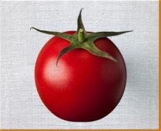 White Tomato Canvas Art Print