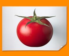 White Tomato Poster