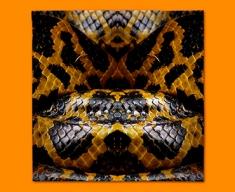Yellow Snake Animal Skin Napkins (Set of 4)
