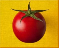 Yellow Tomato Canvas Art Print