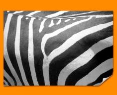 Zebra Animal Skin Poster